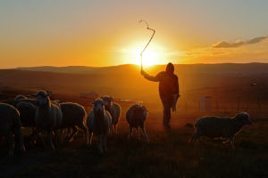 Shepherding the Lost